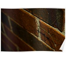 Walking Stick on Bricks Poster