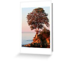 Sunset and the Arbutus Tree Greeting Card