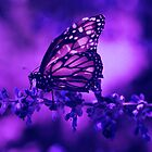 Butterfly by AngelinaLucia10