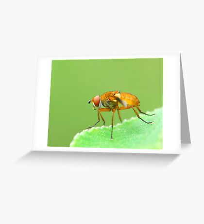 coloured one Greeting Card