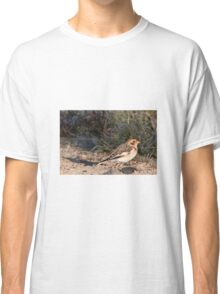 Snow Bunting (winter plumage) Classic T-Shirt