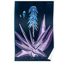 A curious herbal Elisabeth Blackwell John Norse Samuel Harding 1737 0586 The Common Aloes Inverted Poster