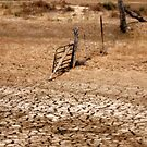 Country in drought by Julie Sleeman