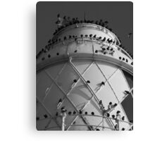 starlings roost Canvas Print