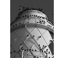 starlings roost Photographic Print