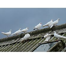 doves on rooftop, colour Photographic Print