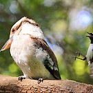 '' Bird Attack '' by helmutk