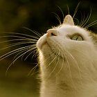 Simon the cat by Heather-Jayne