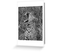 Yawning Leopard Greeting Card