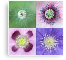 Clematis, poppy and nigella Canvas Print