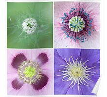 Clematis, poppy and nigella Poster
