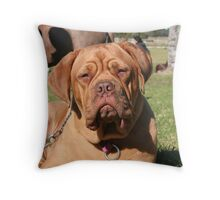 What ya lookin' at? Throw Pillow