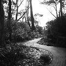 Path to Greenfields Beach ~ Jervis Bay by JennyMac