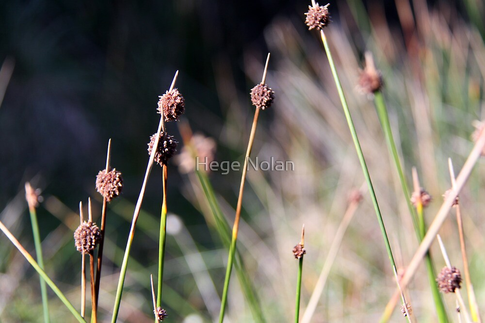 winter grass in the sun by Hege Nolan