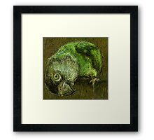 Sir Digby, 2013 Framed Print