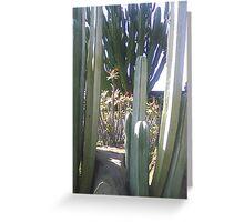 Cactus and Sedum Greeting Card