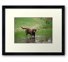 Ringo the Frog Hunter Framed Print