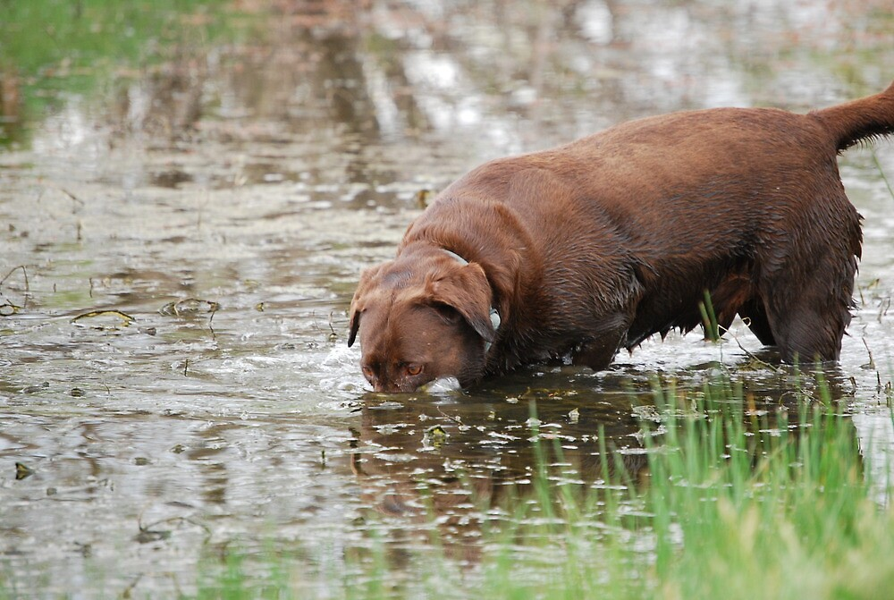 Frog Hunting Strategy by Suz Garten
