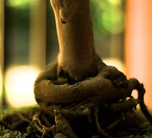 Bonsai Roots - Mt Coot-tha Botanic Gardens by Matthew Brown