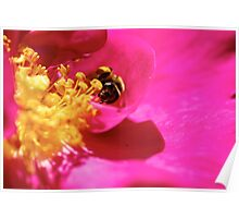 Stamens + Bee Poster