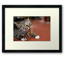 Spitting feathers Framed Print
