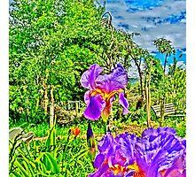 Flight of the Iris Bee, 1 of 4 Photographic Print