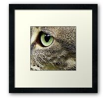C Is For Cat With SeaGreen Eyes Framed Print
