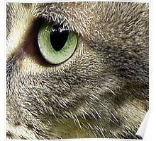 C Is For Cat With SeaGreen Eyes Poster