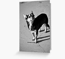 Amigo Greeting Card
