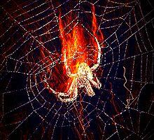 Flaming Arachnid by Lisa Taylor