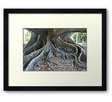 My Enormous Roots Framed Print