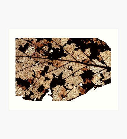 Dead Dry  leaf Art Print