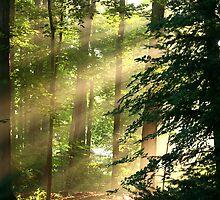 Eastern Rays by Raider6569