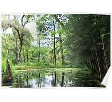 Reflections in a Woodland Pool Poster