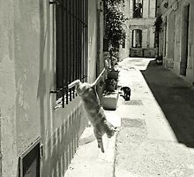 Cat in Arles (France) by Anthony Asael