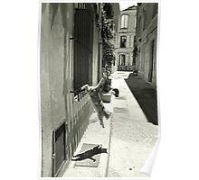 Cat in Arles (France) Poster