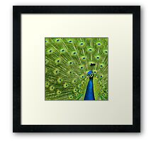 Peacock - Yes I am following you for a reason Framed Print