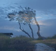 Morning tree by Virginia McGowan