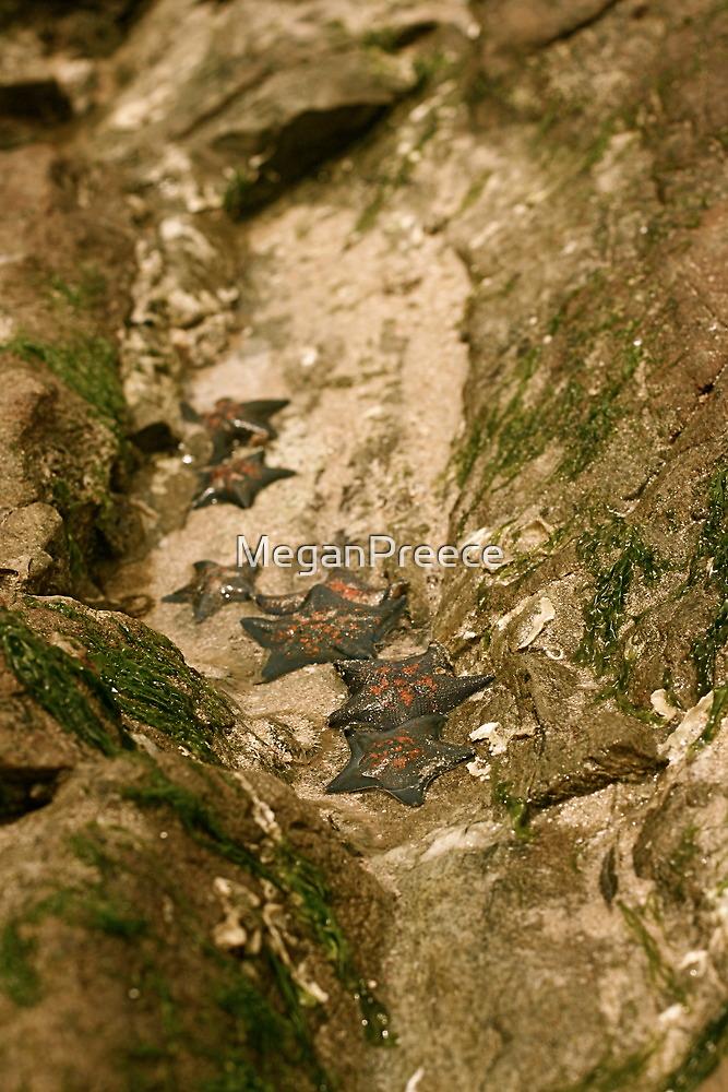 Colony of Korean Starfish by MeganPreece
