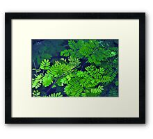 """Nothing can surpass the mystery of stillness."" ~ E.E. Cummings Framed Print"