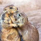 Prairie Dog Love by Sue  Cullumber