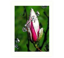 """Magnolia~Water"" Art Print"