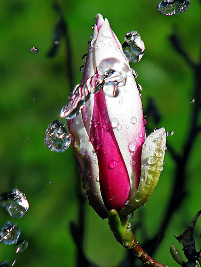 """""""Magnolia~Water"""" by Husky"""
