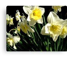 Dancing Daffodils Canvas Print