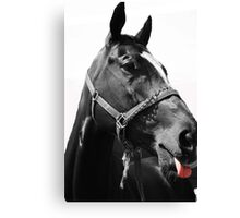 Animals: Horse making face Canvas Print