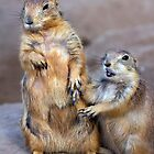 Holding Hands by Sue  Cullumber