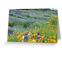 Yorkshire Lavender Greeting Card