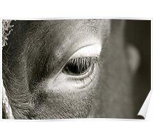 Bulls Eye Poster