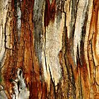 Bark Abstract by Debbie Oppermann