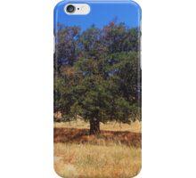 Oak in San Diego Hills iPhone Case/Skin